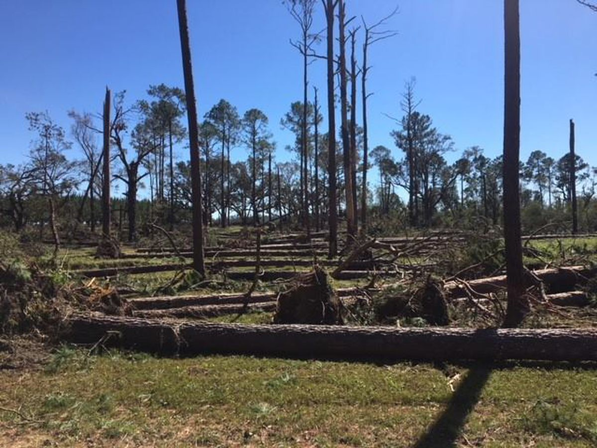 GFC to host meeting for forest landowners in wake of Hurricane Michael