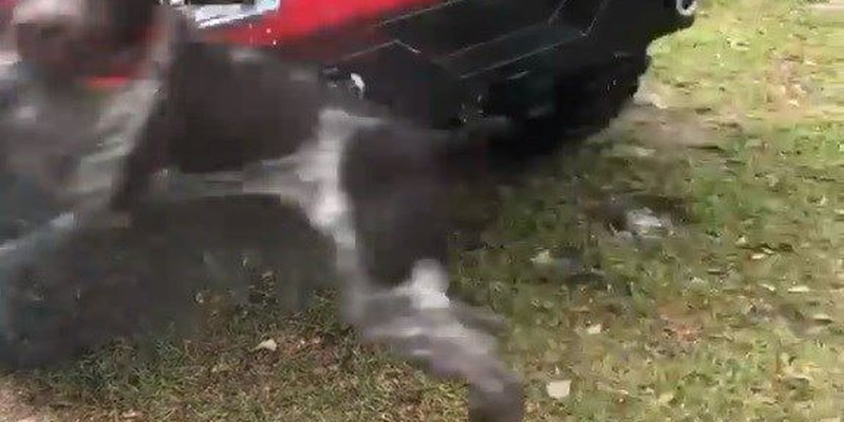 Need a giggle? This South GA dog will have you rolling over with laughter