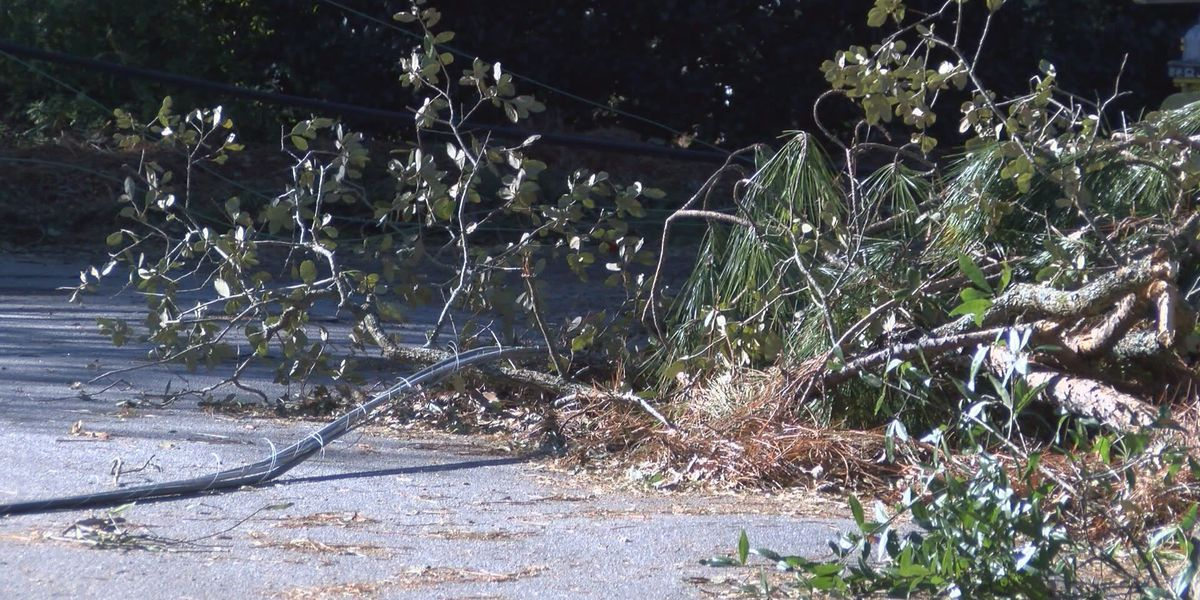 Downed trees thwart power restoration