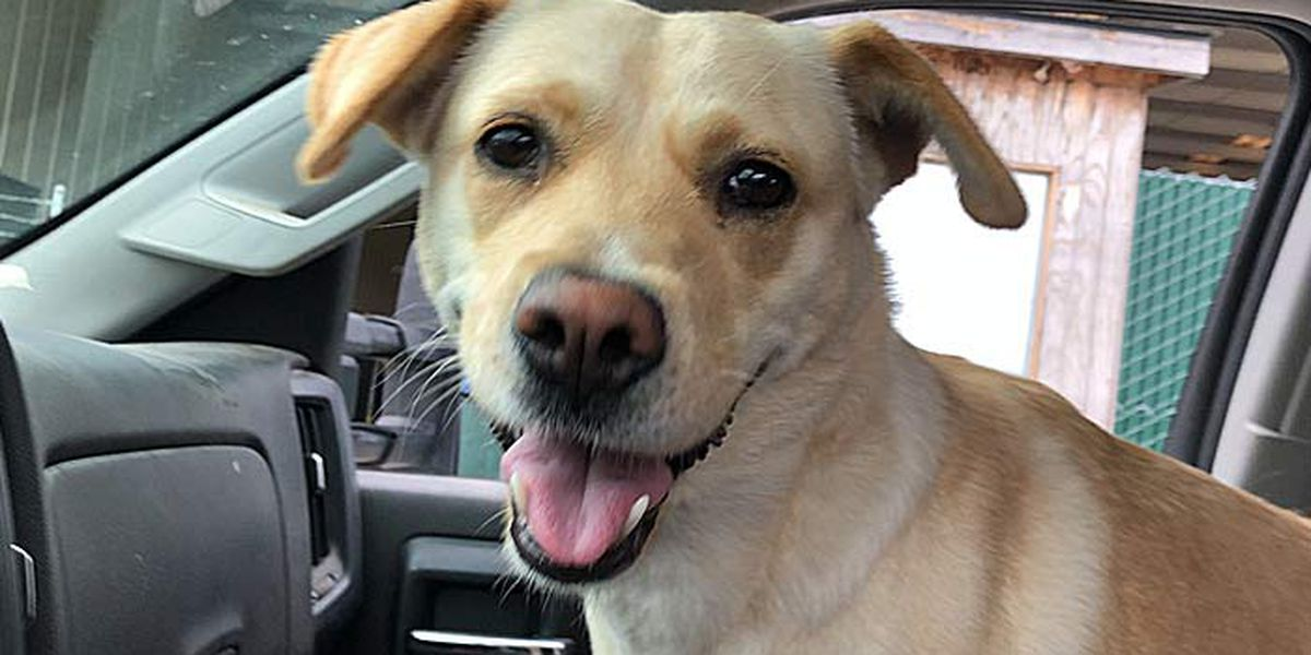 Bella, dog missing from stolen truck, found dead after 2-week search