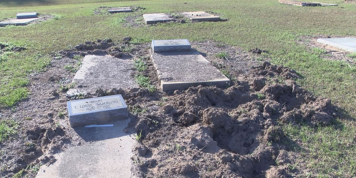 Resident concerned after Riverside Cemetery taken over by wild hogs