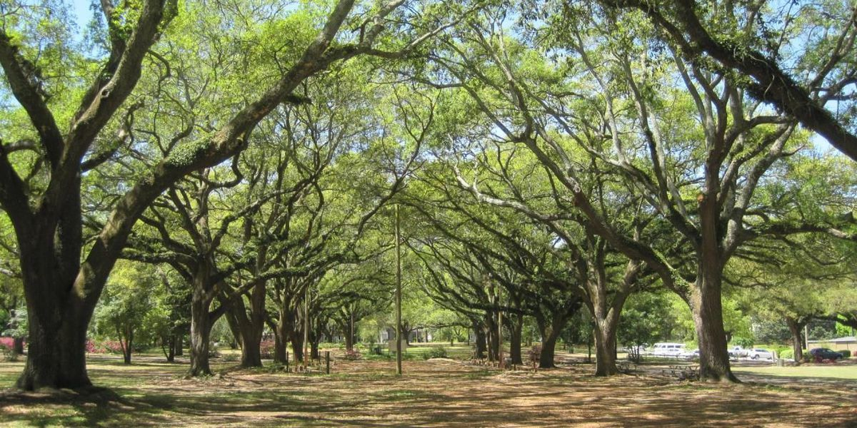 Residents can nominate Tift park for $20,000 improvement grant