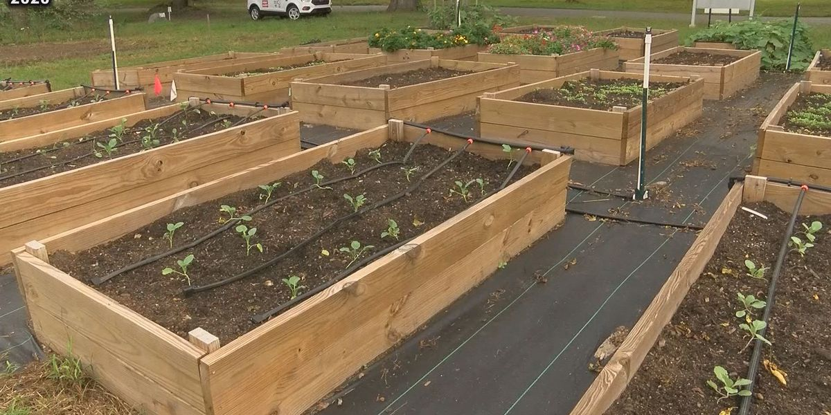 Healthy Sumter has community garden Planting Day Sunday