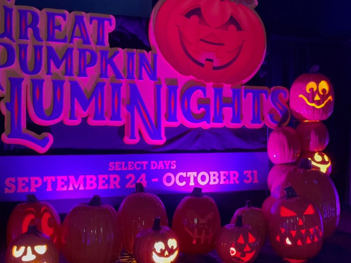 Wild Adventures sees successful season start, announces new fall event