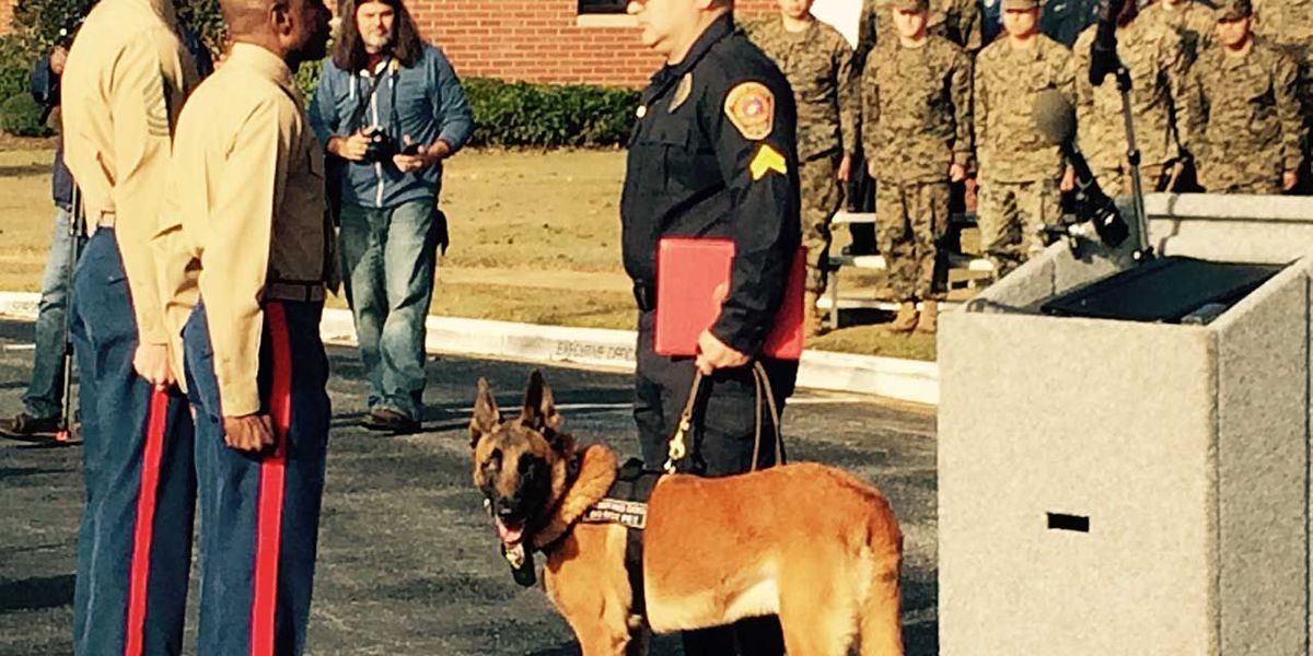 Pablo, a military working dog is honored and adopted