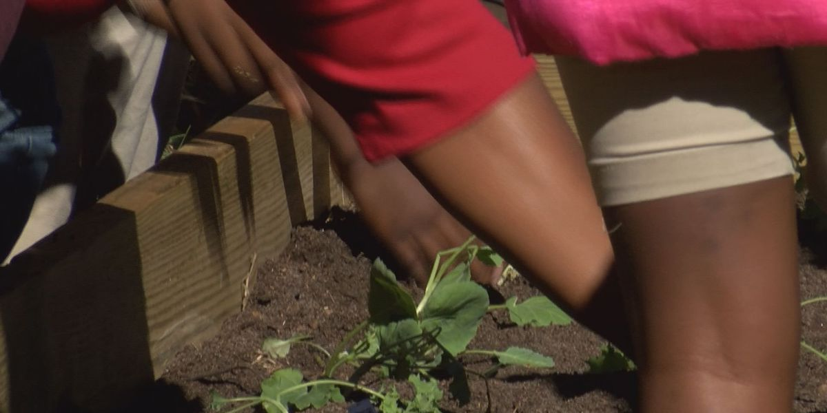 Dougherty Co. students grow their own food