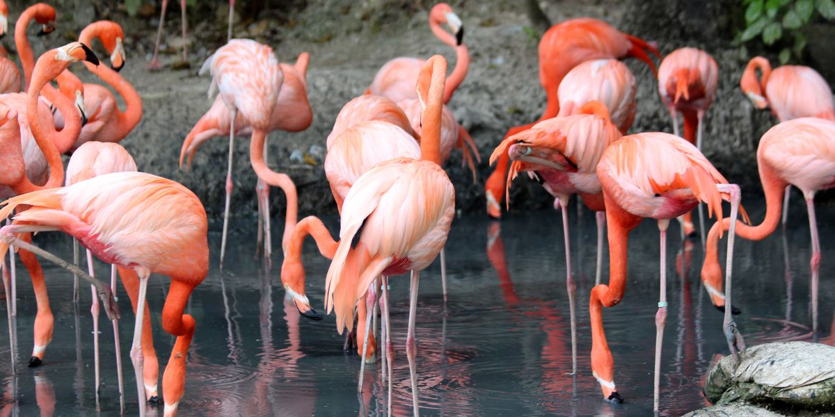 Zoo euthanizes flamingo after child hits it with rock