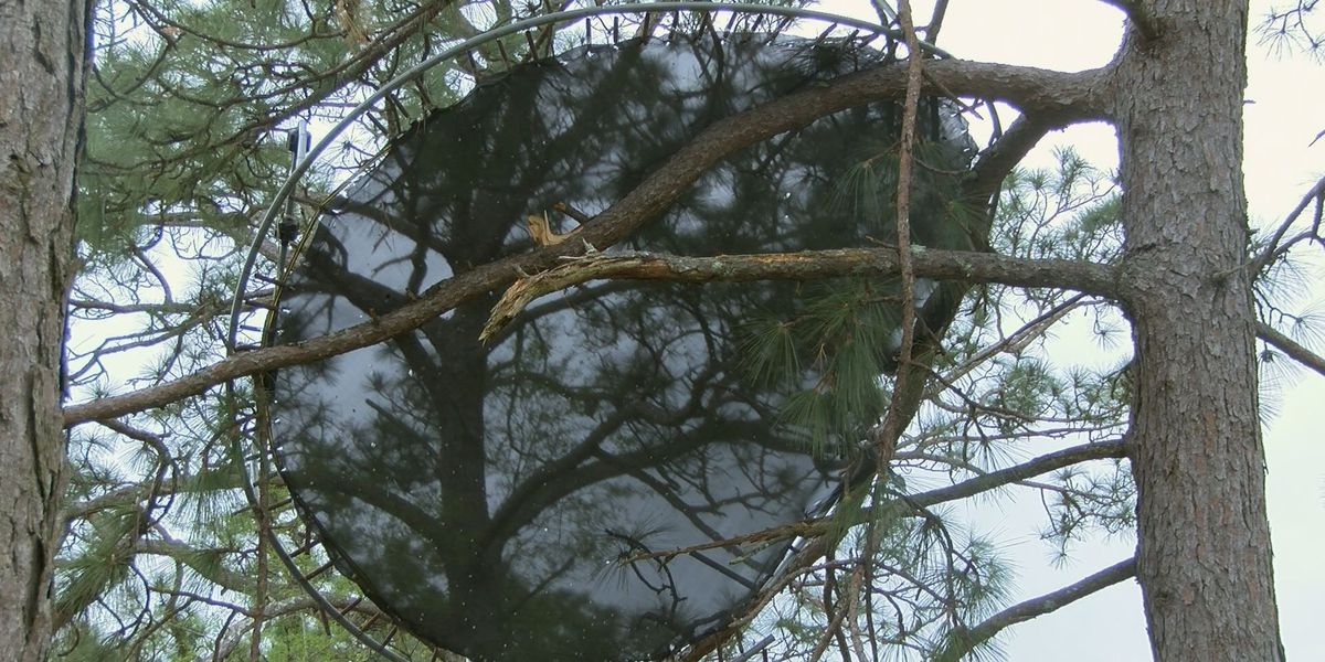 Trampoline stuck in tree, house destroyed after storm