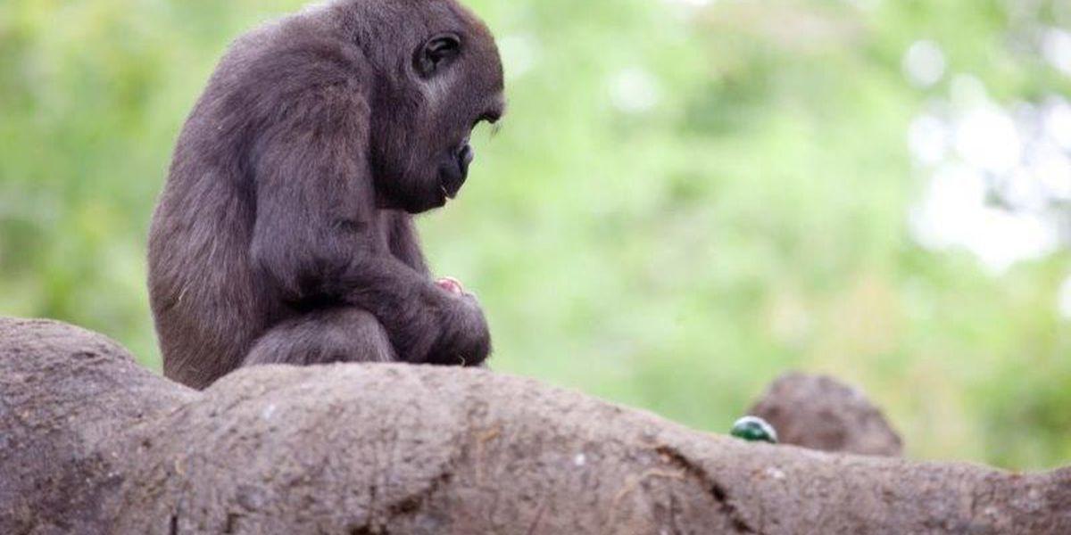 Zoo Atlanta to host egg hunt for animals