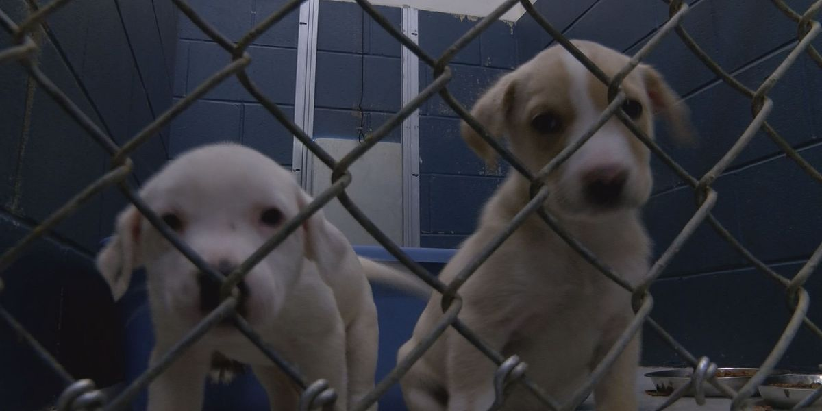Lee Co. Animal Shelter to start holiday hours, help animals find homes