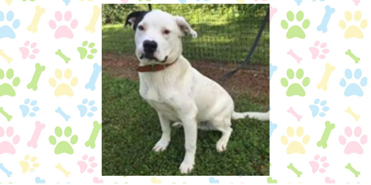 Pet of the Week: May 6-10