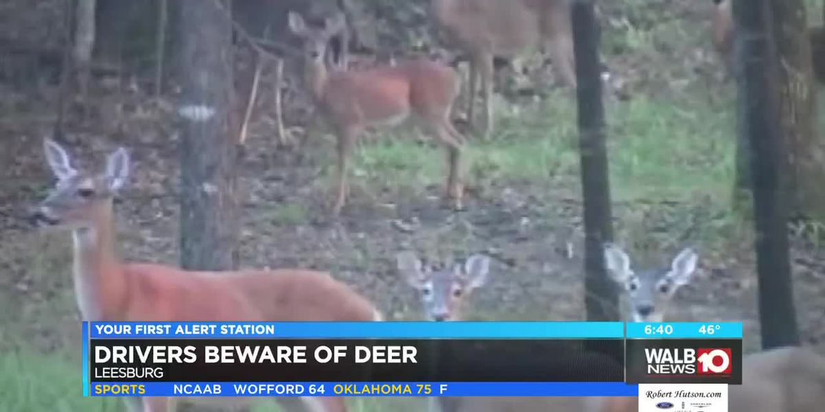 Drivers beware of deer on roads