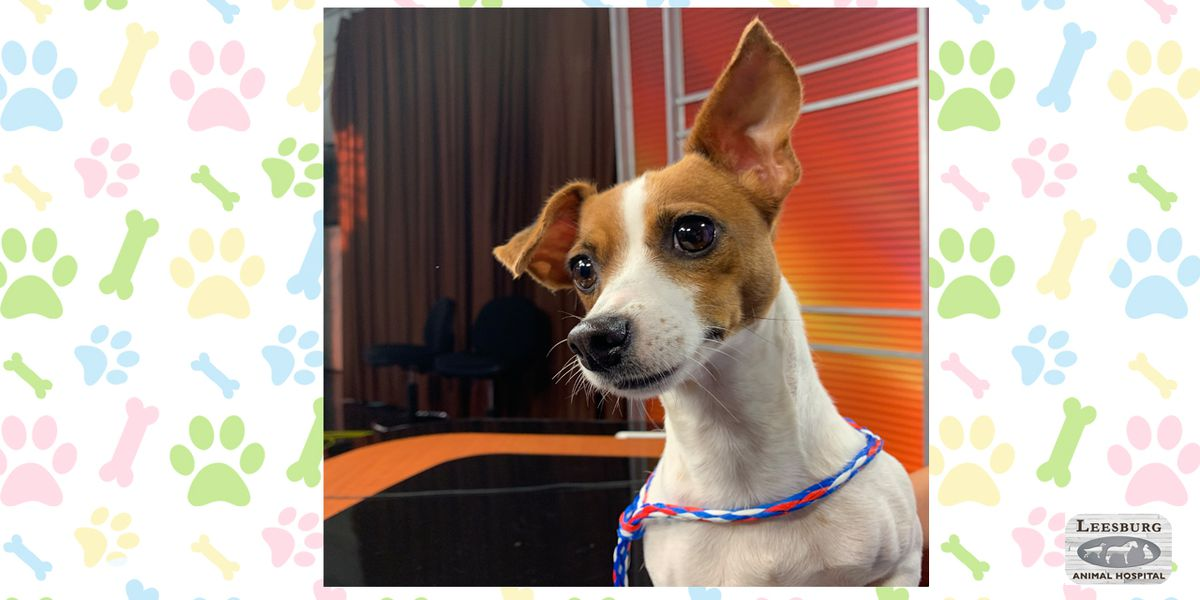 Pet of the Week: July 8-12
