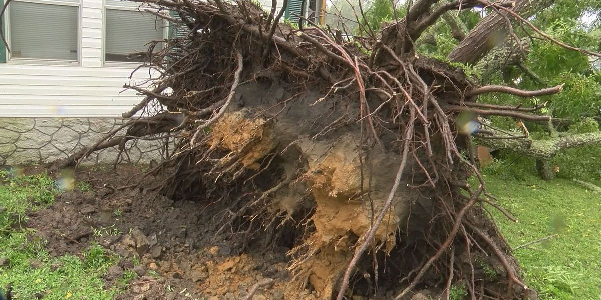 Thomasville couple thankful to be alive after a tree goes through bedroom