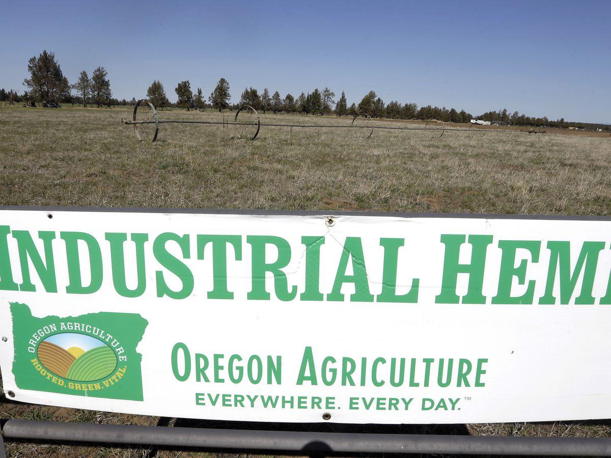 With OK from Congress, US hemp market set to boom