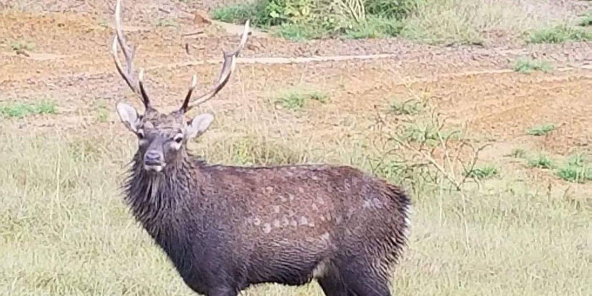 Large deer captured in Douglas