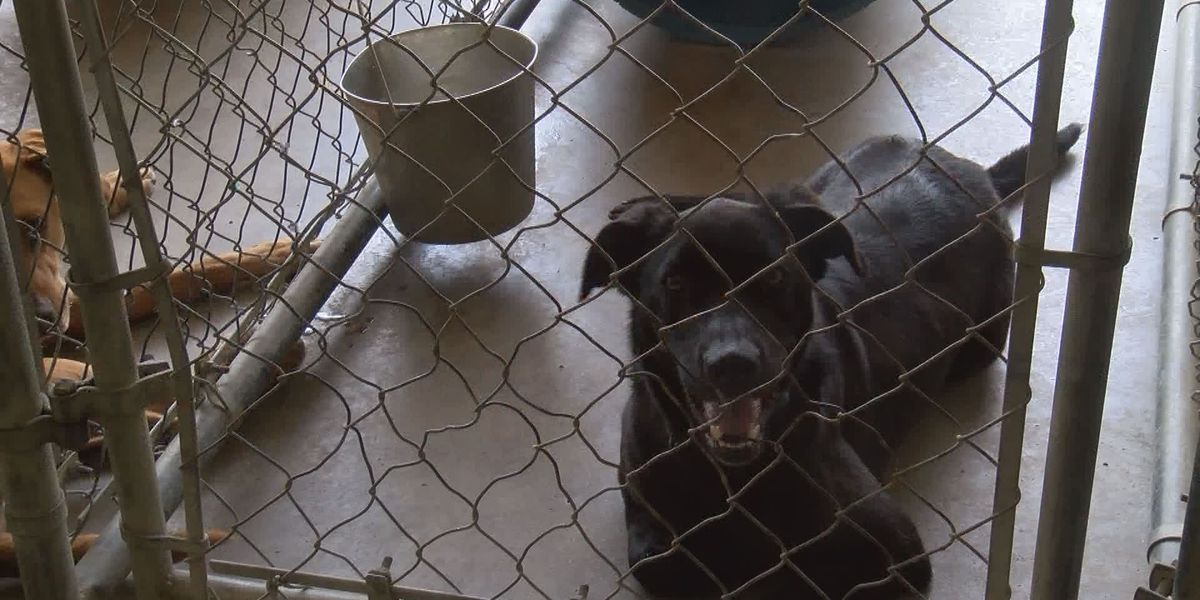 Community works to help reopen Cairo animal shelter