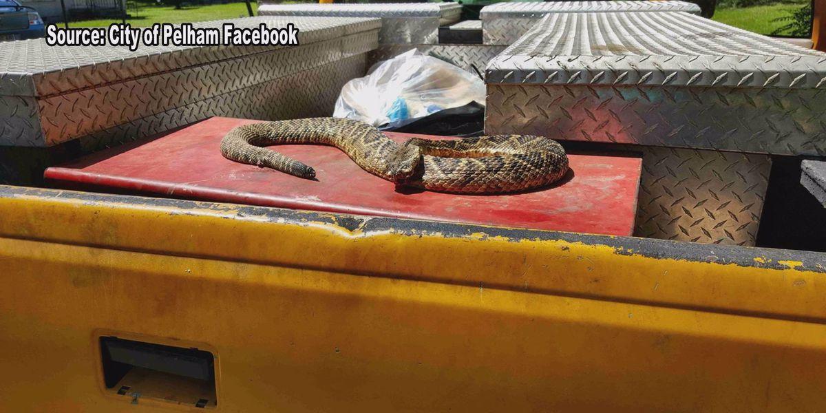 Rattlesnake found in Pelham neighborhood