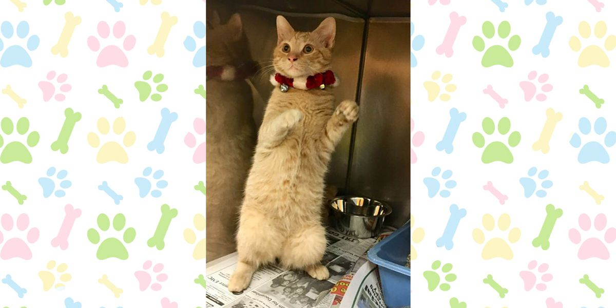 Pet of the Week, Dec. 17-21