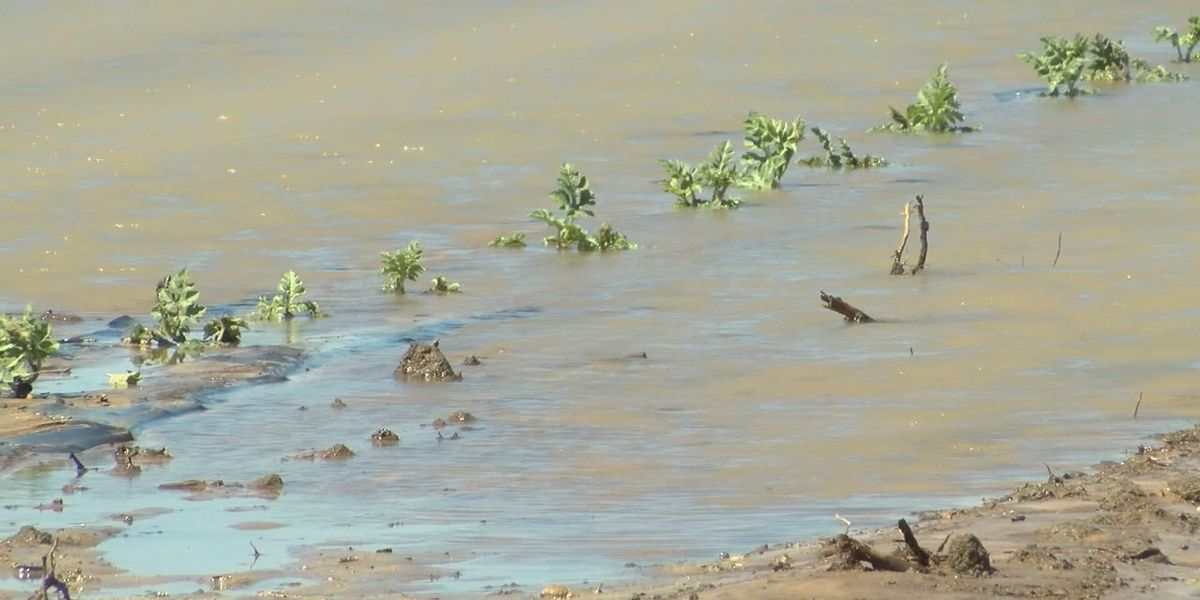 Watermelon crop affected by Wednesday's storm
