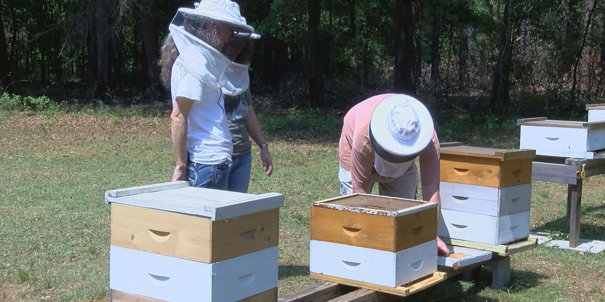 Summer heat means more bees and honey