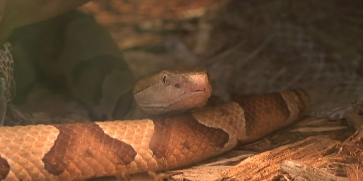 On the crawl: What to do if you spot a snake in your backyard