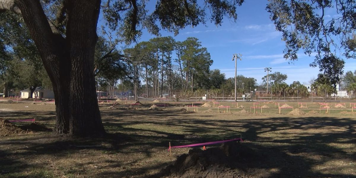 Volunteers needed for Tift Park Community Planting day