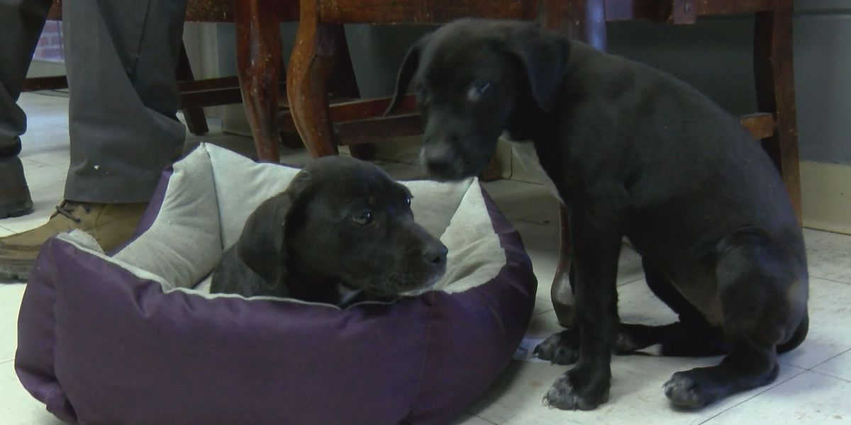 Moultrie Humane Society invites volunteers to help care for animals