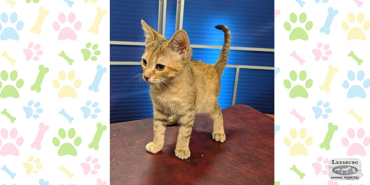 Pet of the Week: Aug. 5-9
