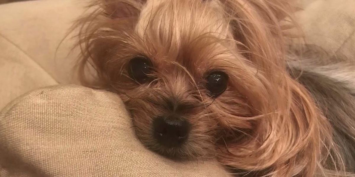 Dog crushed by heavy package FedEx driver threw over fence, family says