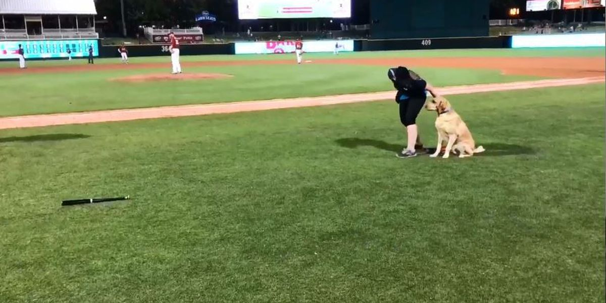 Texas bat dog fail makes for adorable baseball blooper