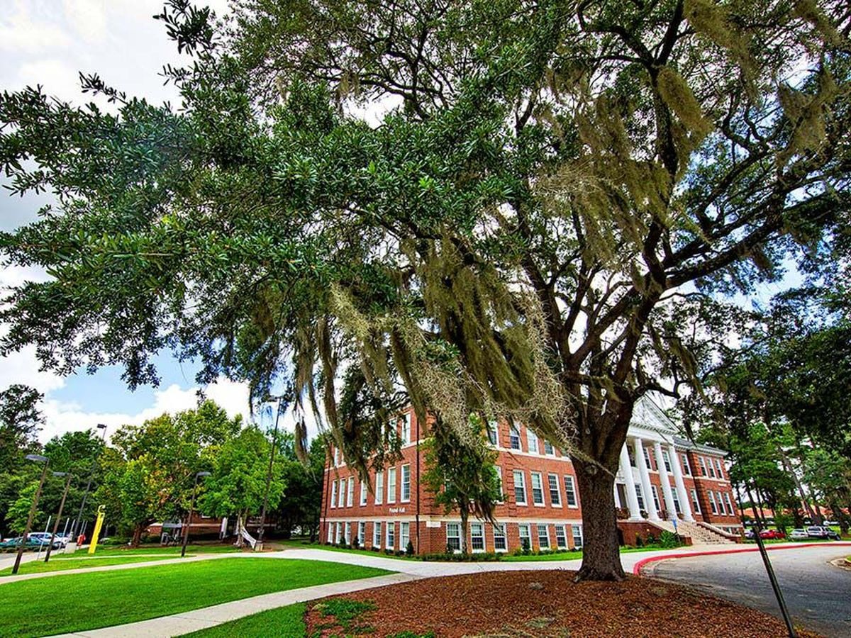 VSU's ancient oaks recognized