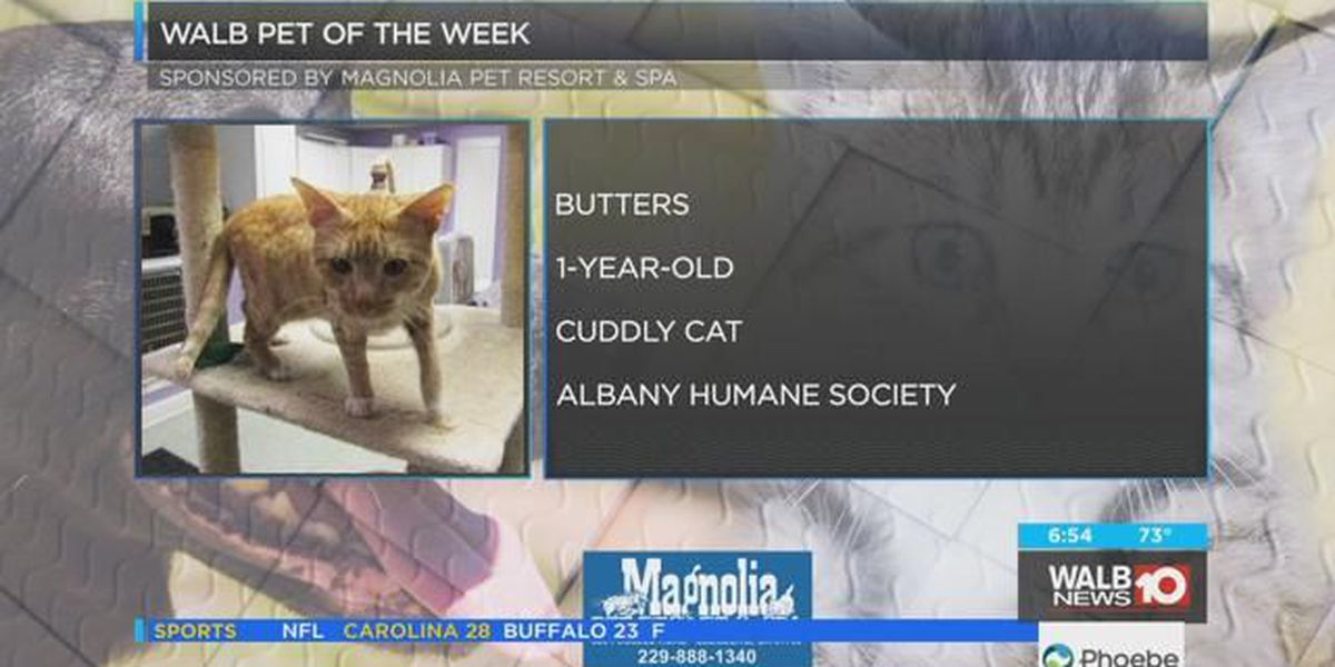 Pet of the Week, Aug. 6-10