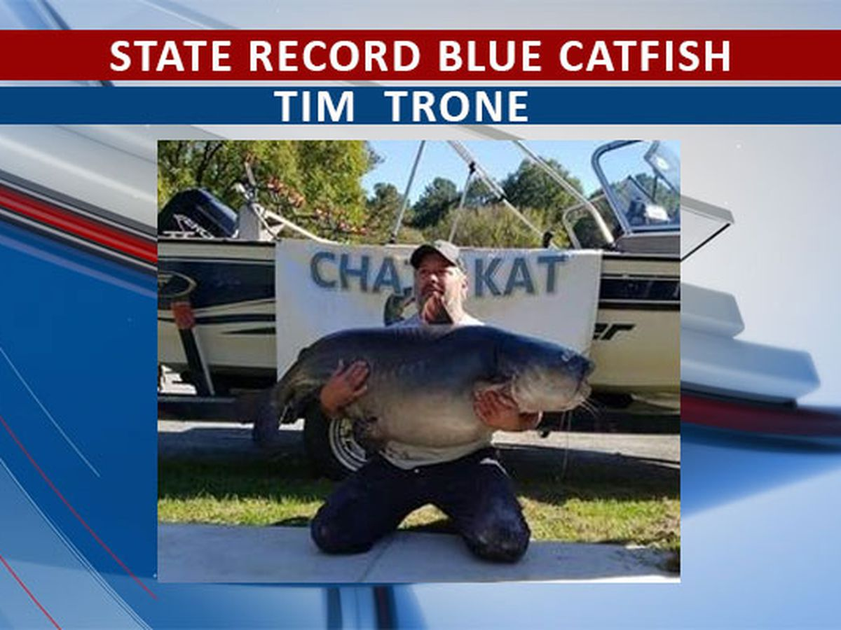 State record blue cat caught in Stewart Co.