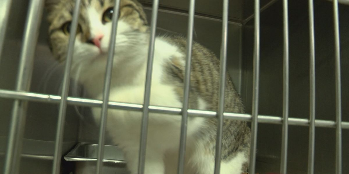 Albany Humane Society needs donations to help care for animals
