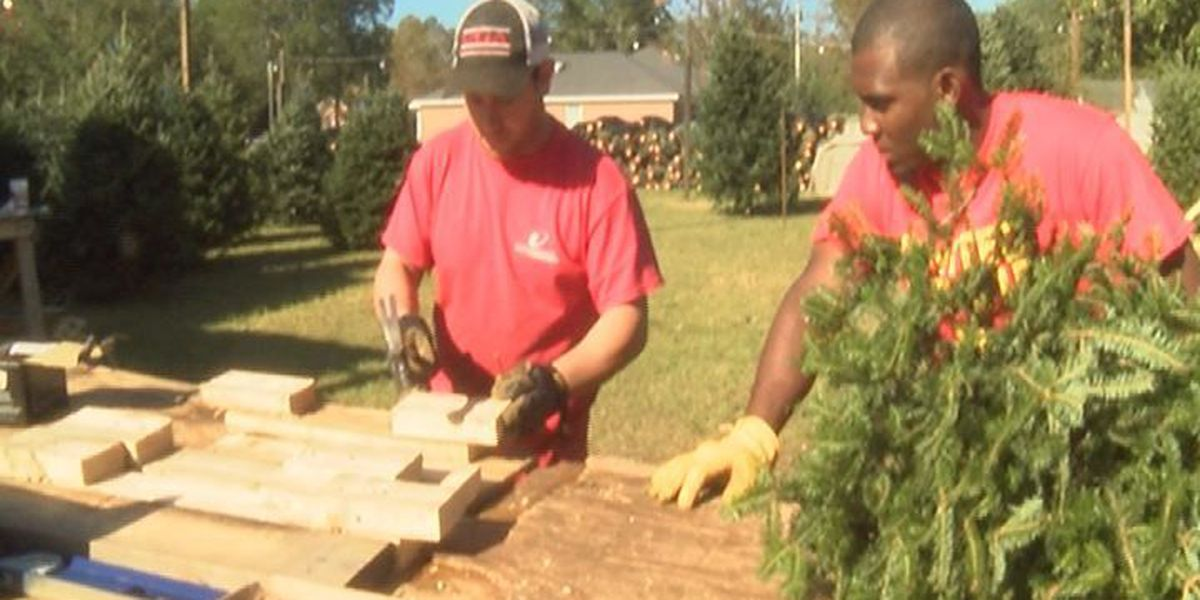 Residents begin the search for the perfect Christmas tree