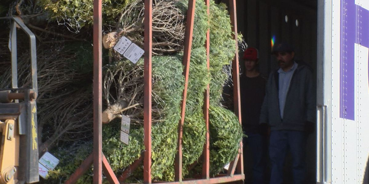 Cordele Christmas tree farm donates 25 trees to troops
