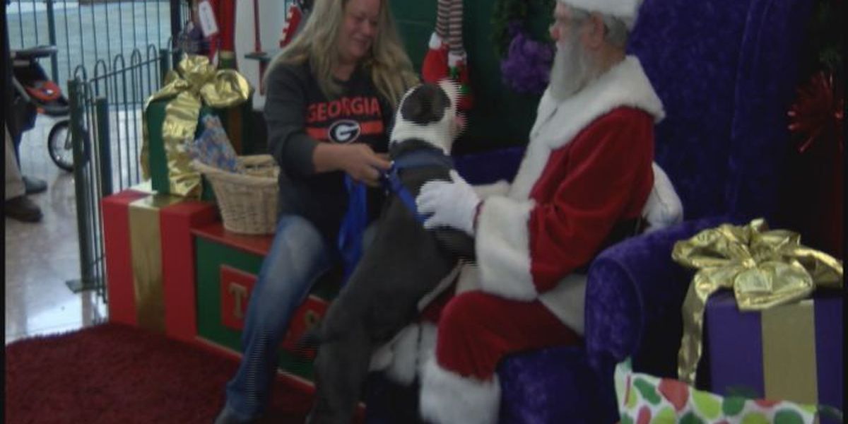 Dogs get their turn on Santa's lap