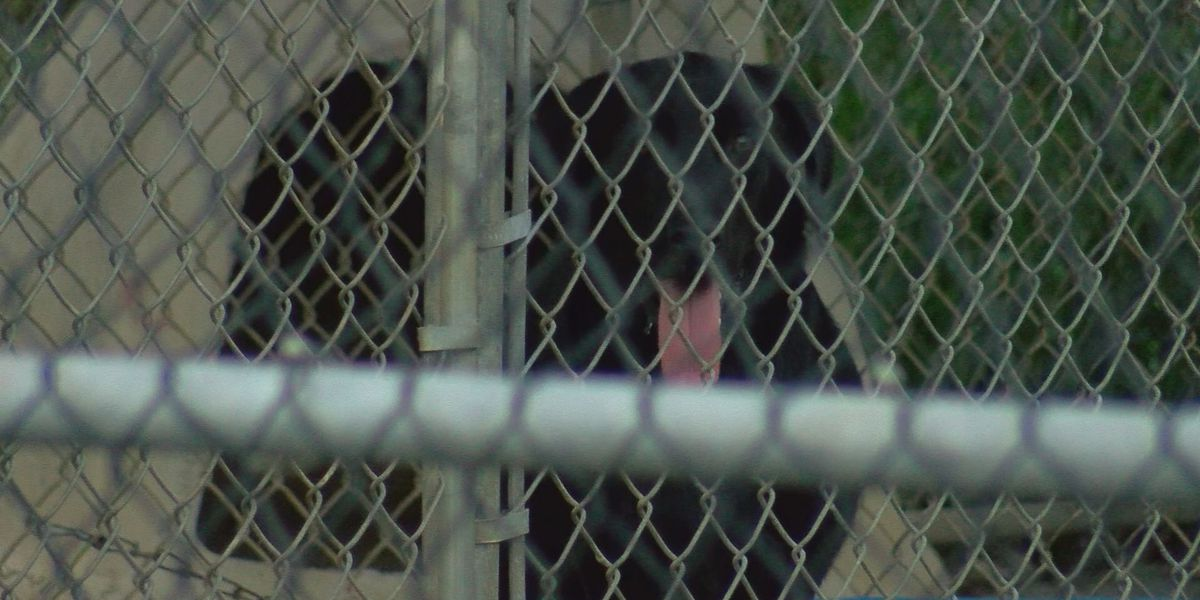 Albany City Commissioners to consider new contract with Albany Humane Society