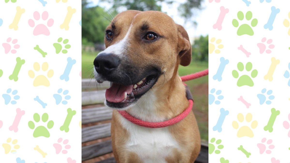 Pet of the Week, April 29 - May 3