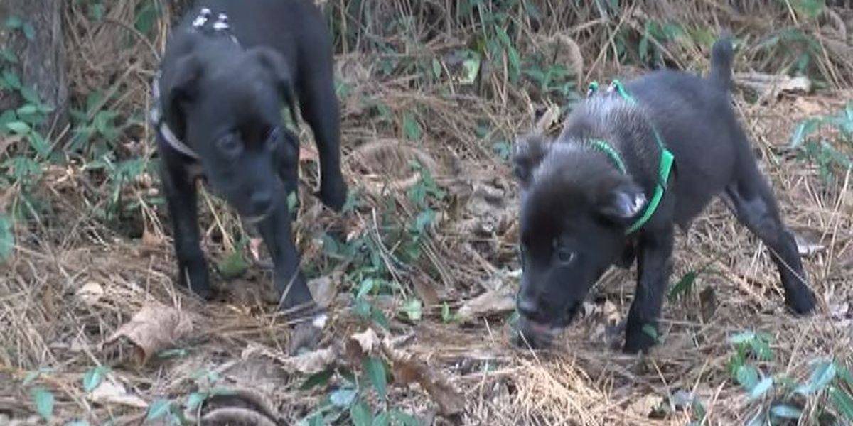 Burned puppy needs permanent home
