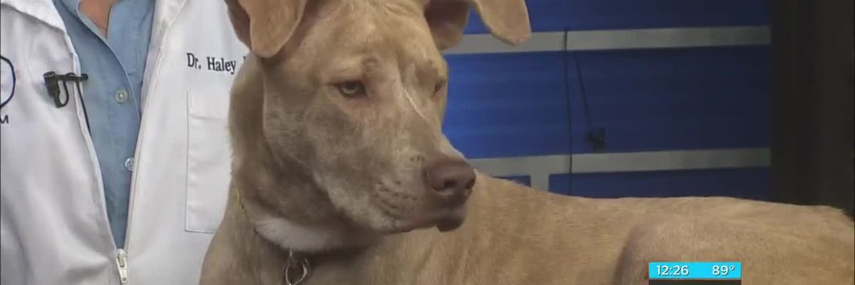 Pet of the Week: Sky