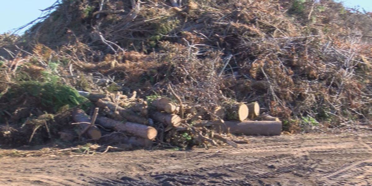 Friday last day for second pass of Dougherty Co. debris pickup