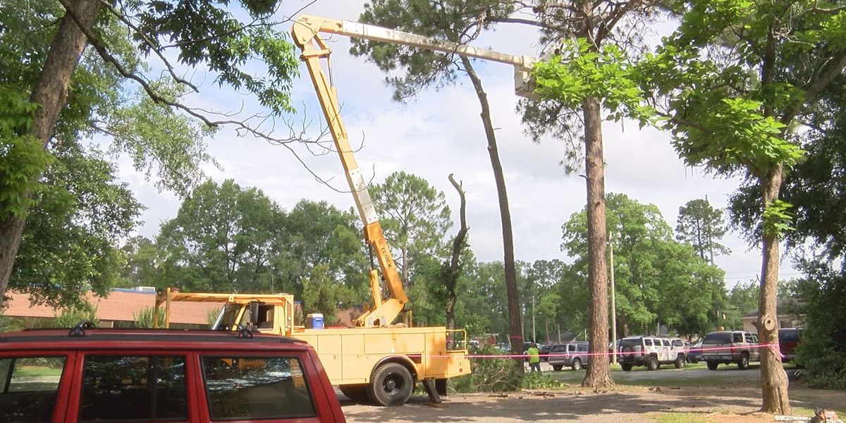 Trees could cause issues after heavy rain