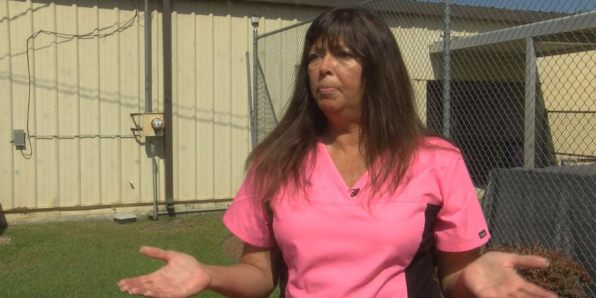 Albany Humane Society director fired after allegations were made against her