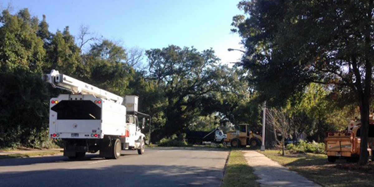 City takes down ancient tree
