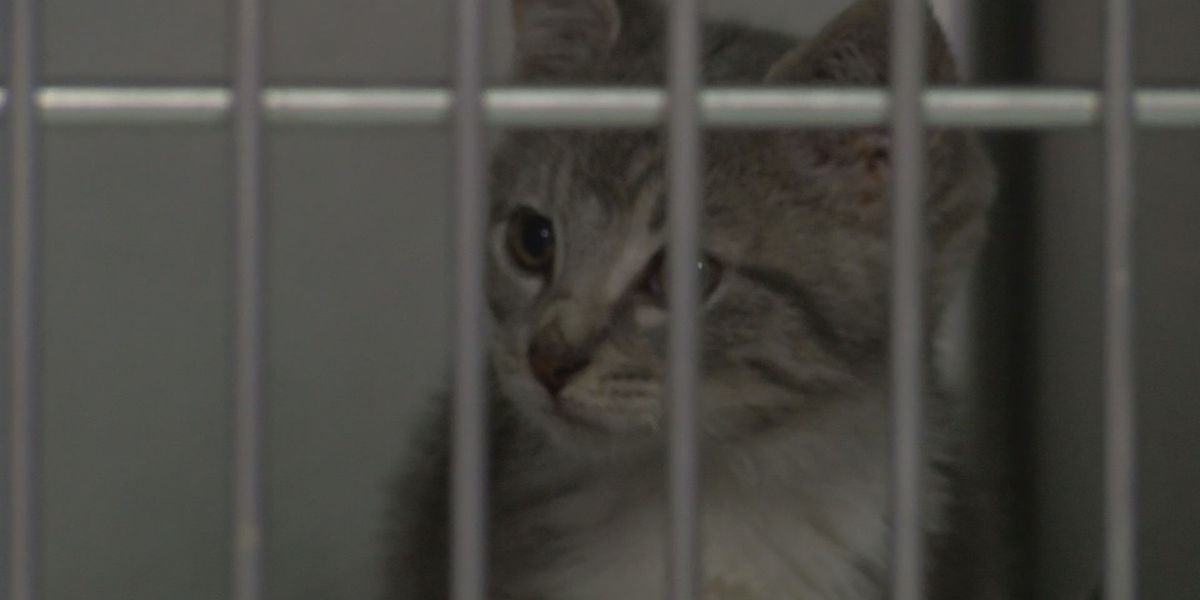 Residents outraged over recent dismembering of animals and cruelty cases