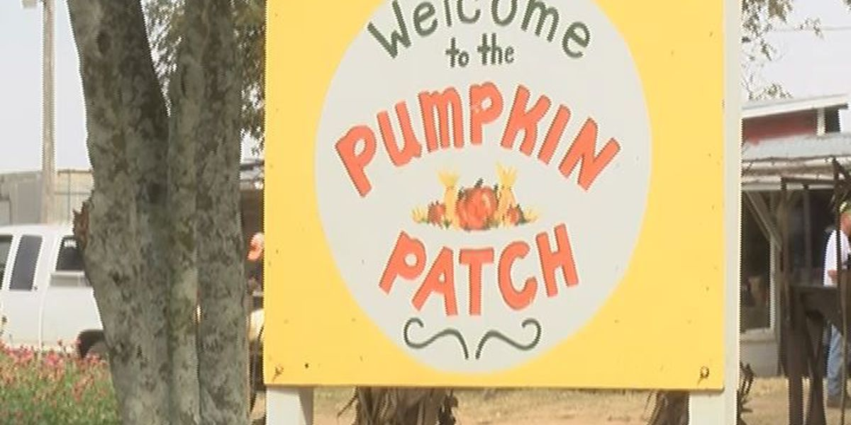 Families search for quality time and perfect pumpkins