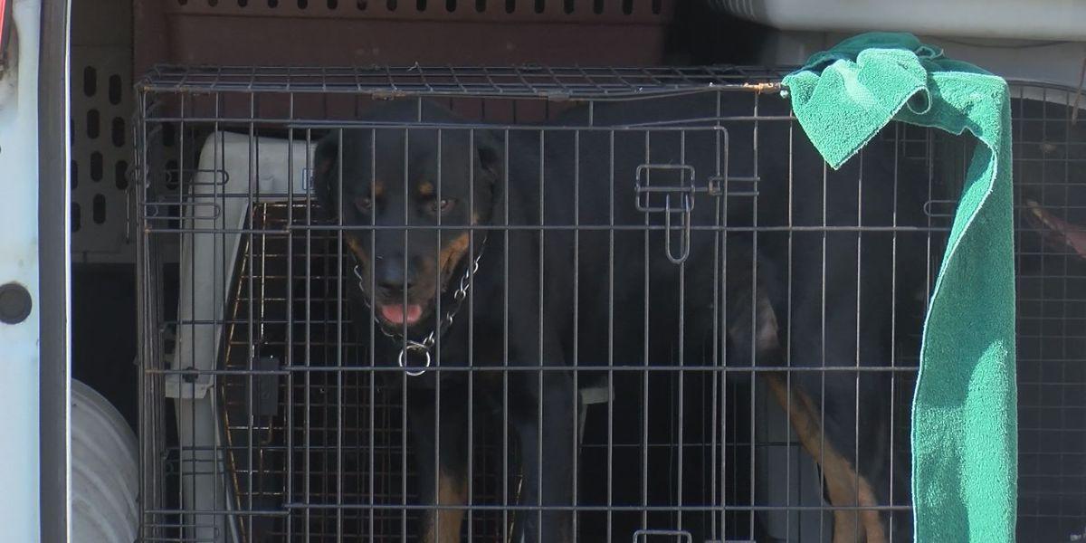 Albany Humane Society shelters animals from Camden County