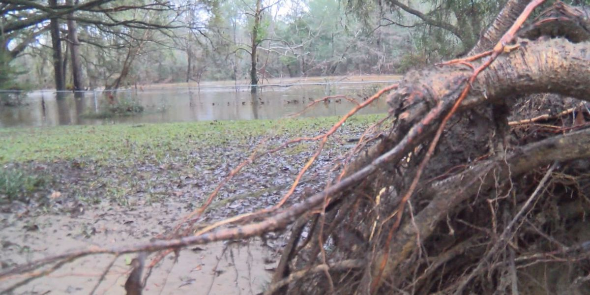 Uprooting trees pose threat to residents